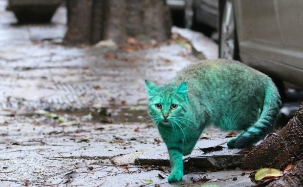 Зелёный кот идёт по улице