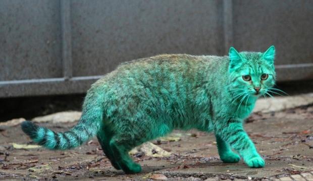Кот с зелёной шерстью
