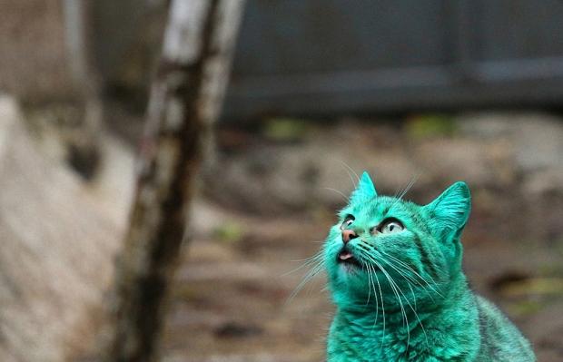 Мордочка зелёного кота