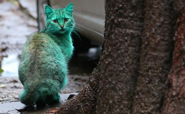 Зелёный кот оглядывается