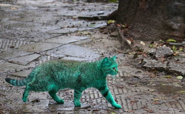 Зелёный кот идёт по мостовой