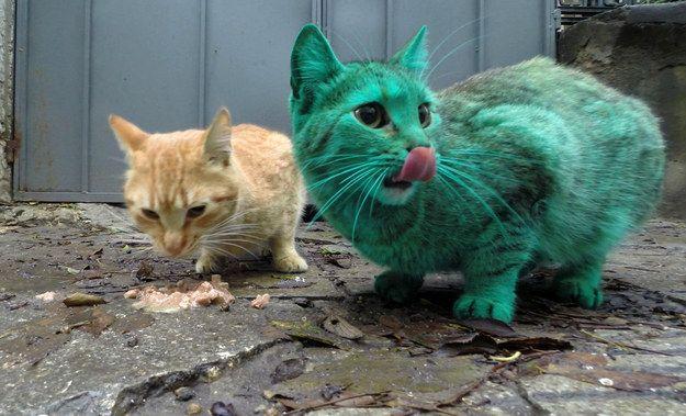 Два кота — зелёный и рыжий