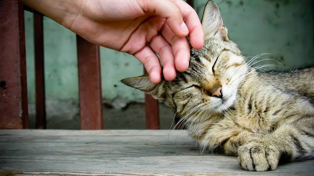 Рука хозяина гладит кота