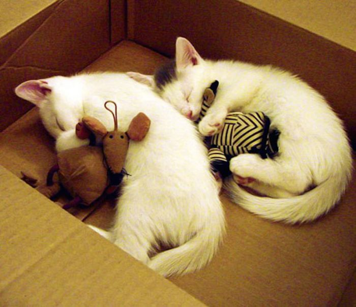 Крепкий сон животных с мягкими игрушками