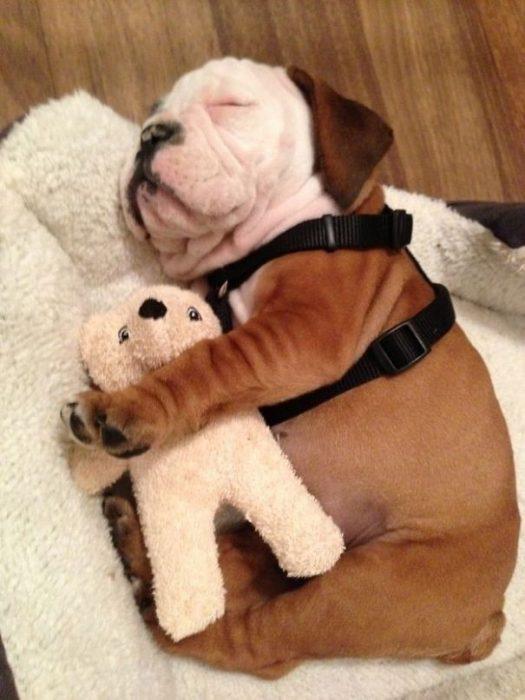 Собака с мишкой