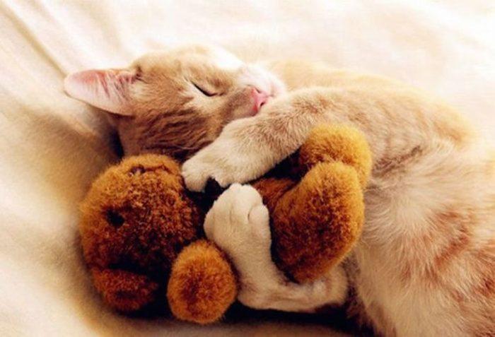 Кошка спит с мягкой игрушкой