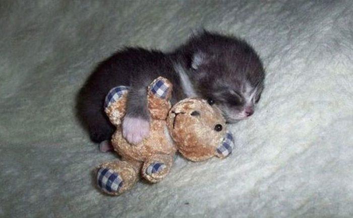 Котёнок с плюшевым медвежонком