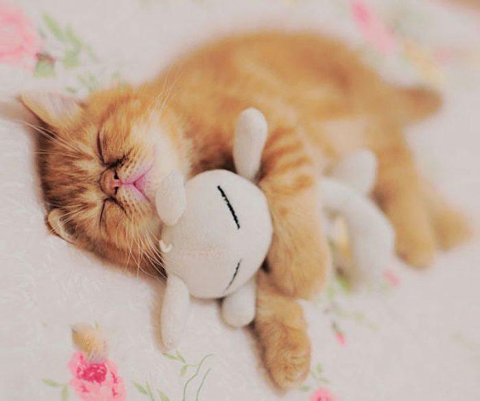 Рыжий кот спит с белым зайчиком
