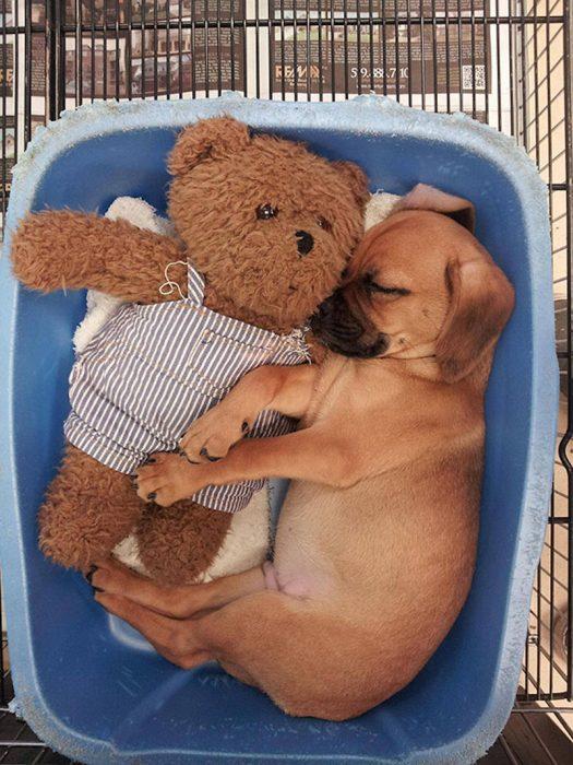 Щенок с плюшевым медведем