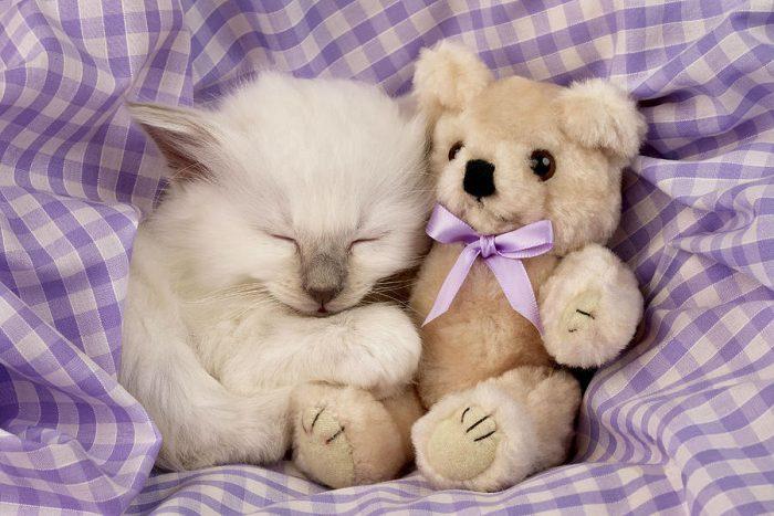 Белый котик с мягкой игрушкой