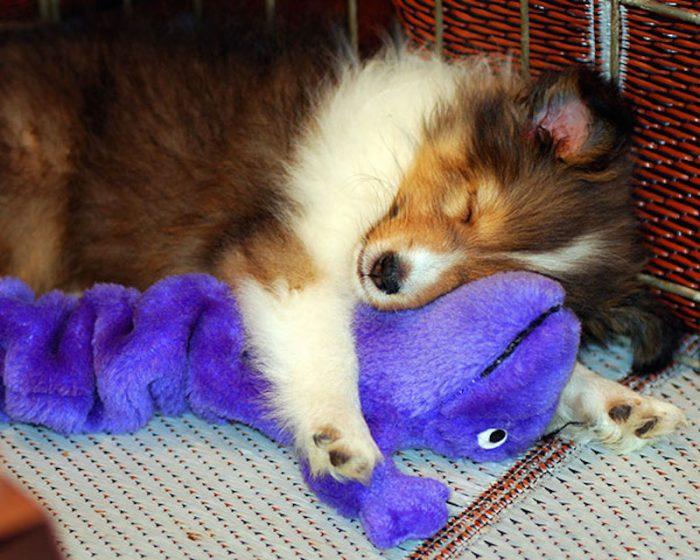 Собака спит на мягком драконе