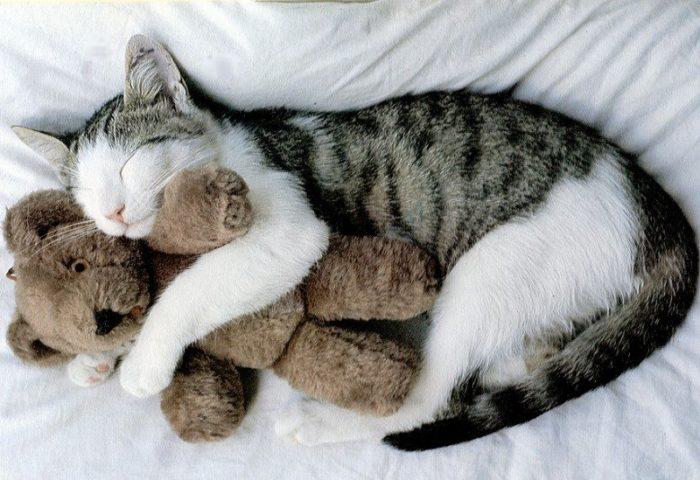 Полосатый кот вобнимку с плюшевым медведем