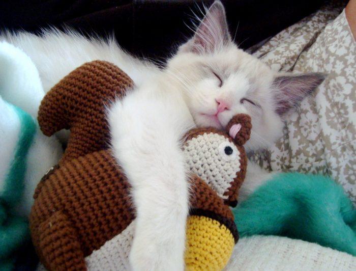 Кошка обнимает вязанную белочку