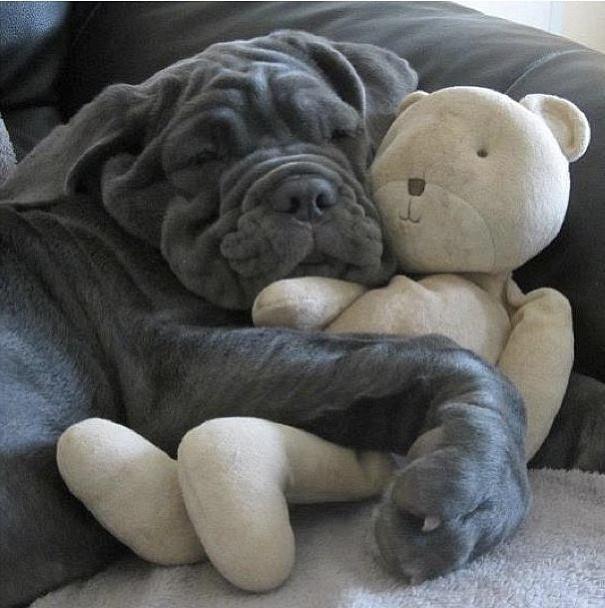 Пёс с мягкой игрушкой