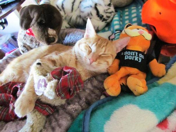 Рыжий кот в куче мягких игрушек