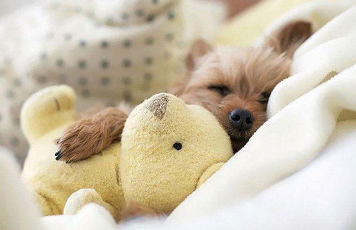 Собака с мягкой игрушкой