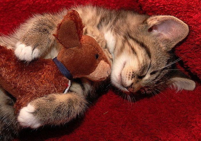 Кот с плюшевой игрушкой