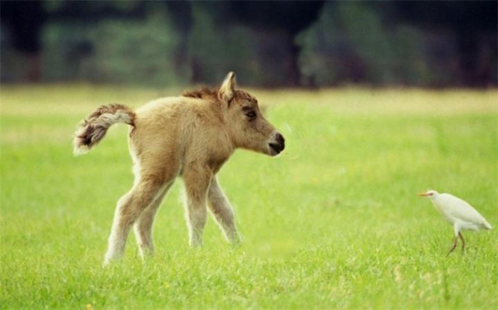 Животные без шеи: фото причудливых земных монстров