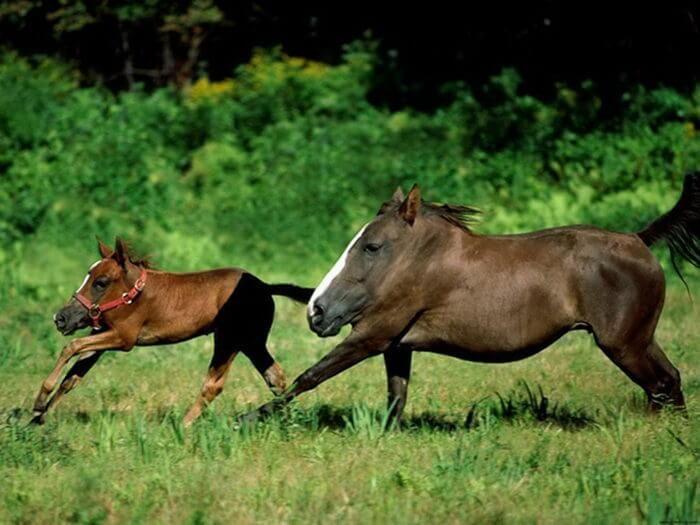 лошади без шеи