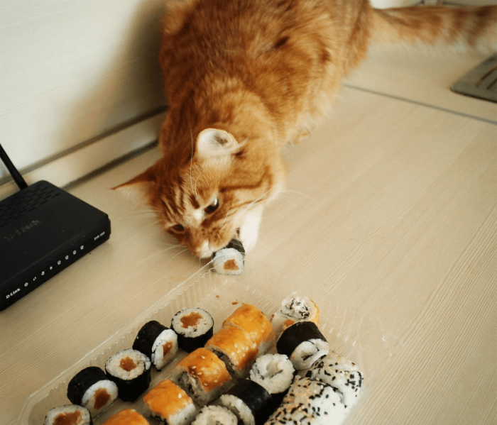 Кот ест роллы