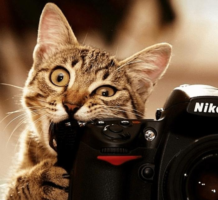 Кошка грызёт фотоаппарат