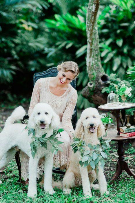 Свадьба пуделей