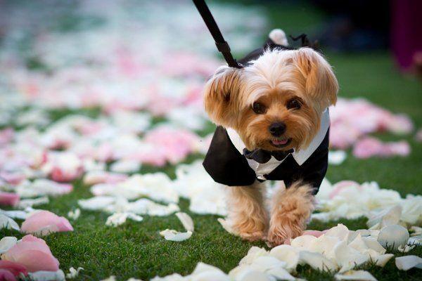 Собака-жених