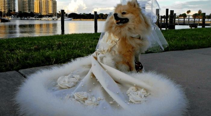 Собака-невеста