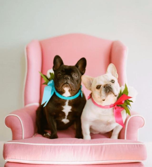 Влюблённые собаки