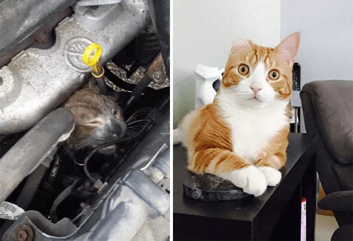 Кот, спасённый из автомобиля
