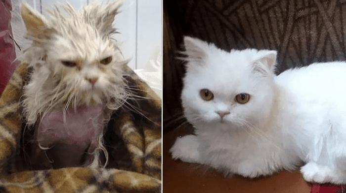 Преобразившийся уличный кот