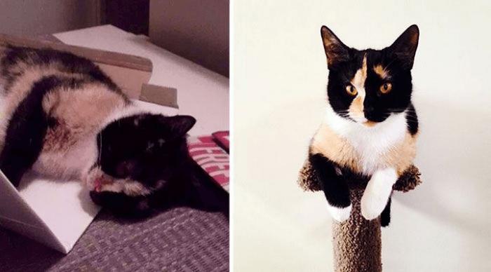 Кошка Элеонора