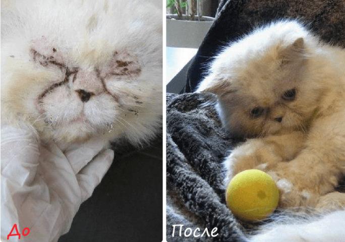 Больной кот, нашедший дом