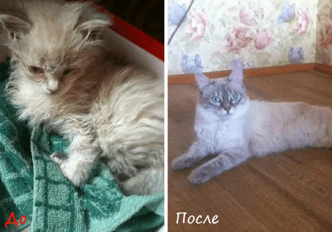 Подросший котёнок