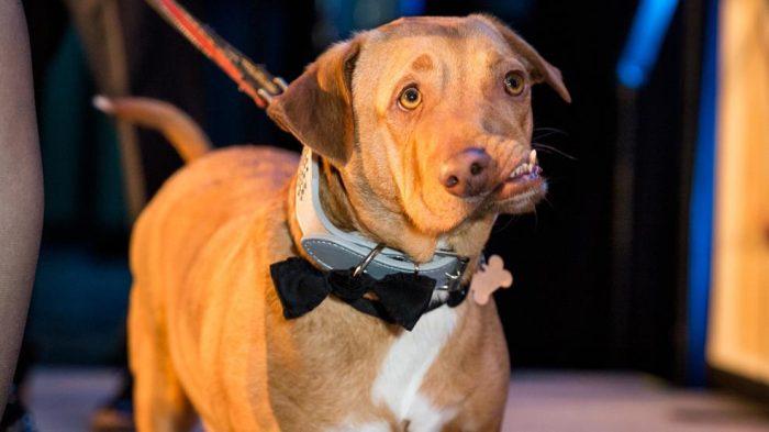 собака с искривленной челюстью