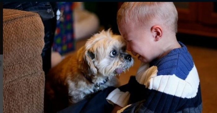 дружба животных и детей