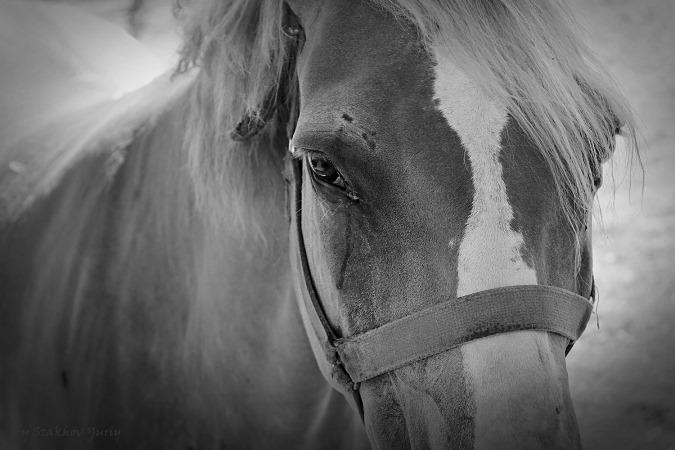 Лошадь плачет