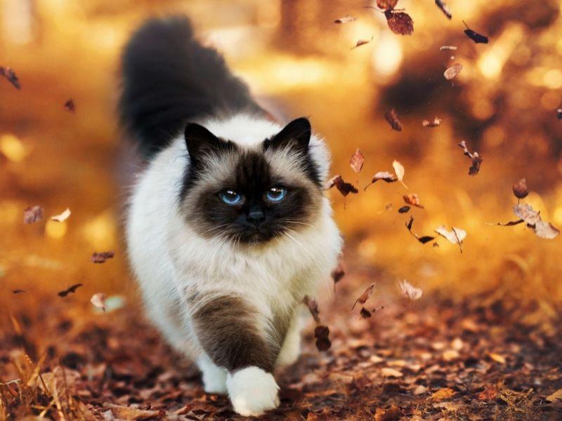 Как фотографировать кошек: превращение в супермодель