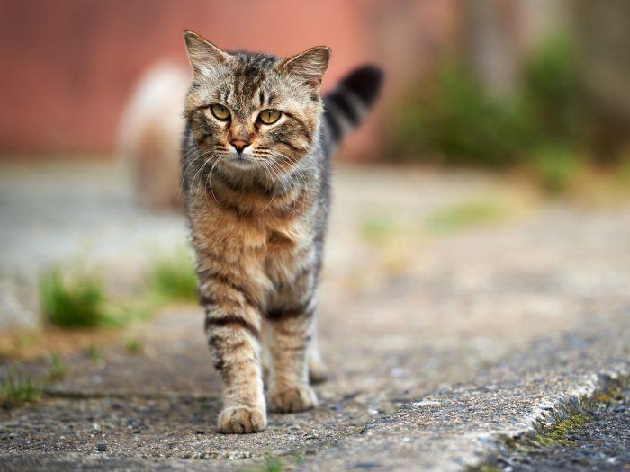 как фотографировать кошек