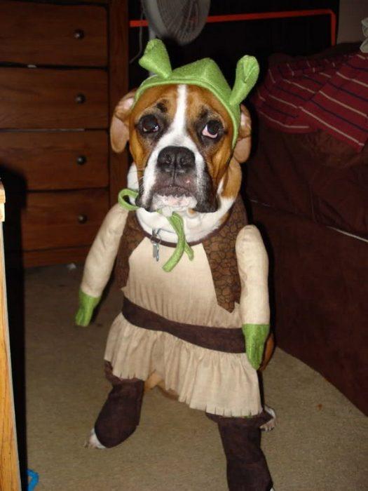 Собака в костюме Шрека