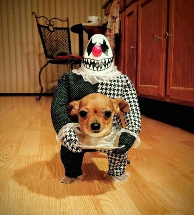 Жуткий собачий костюм