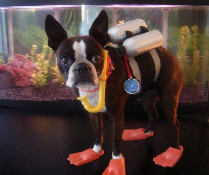 Собака в костюме аквалангиста
