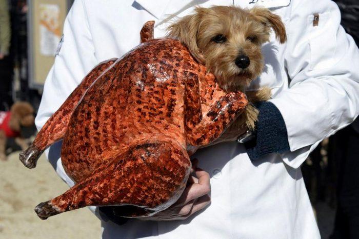 Собака в костюме куры-гриль