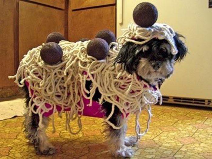 Собачий костюм в виде макарон с фрикадельками