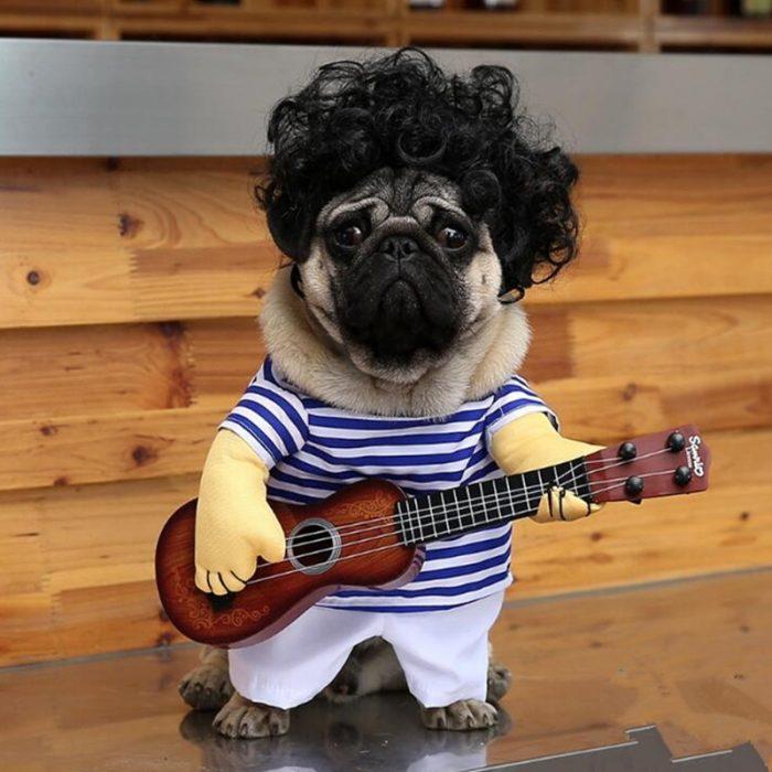 Мопс в костюме моряка с гитарой