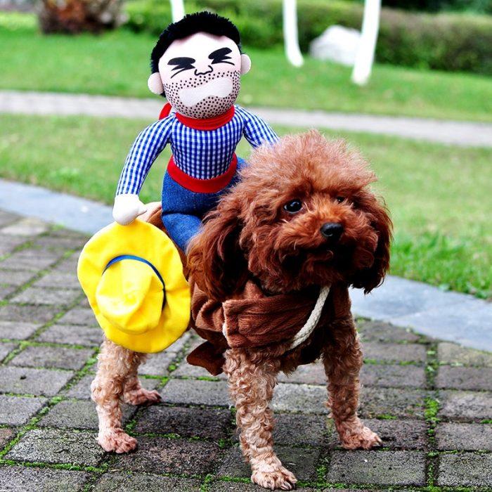 Собака в костюме в виде наездника, сидящего на ней
