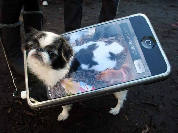 Собака в костюме в виде смартфона