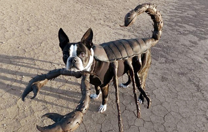 Пёсик в костюме скорпиона