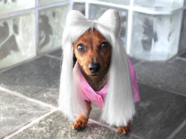 Собака оделась как гламурная дива