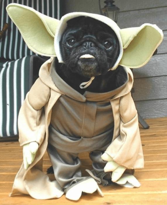 Собака в костюме мастера Йоды